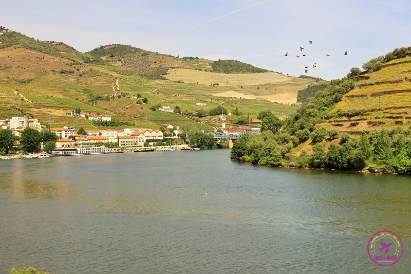 1 douro river birds