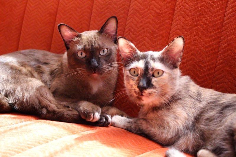 house sitting cats bangkok 1
