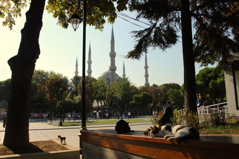 what to do in istanbul 10d