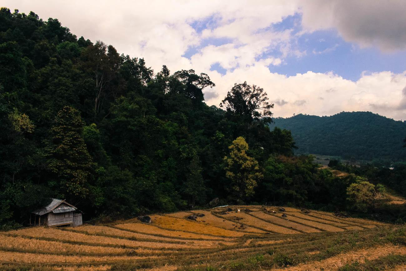 Rice fields on the way to the Chiang Mai mountains.