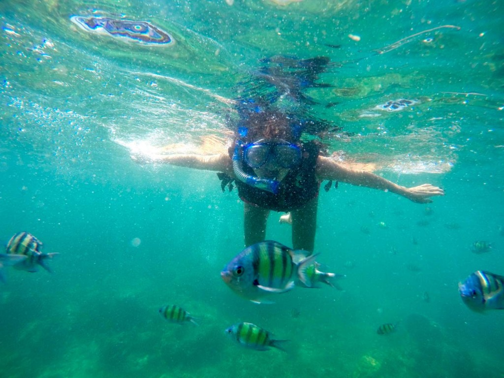 Koh Tao is one of our favorite Thai Islands to do snorkeling! The sea life is amazing!