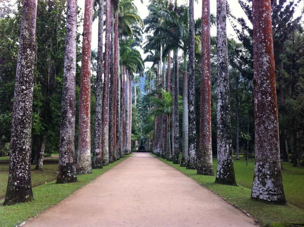 PIC 9 Guide to Rio Olympics Botanic Garden
