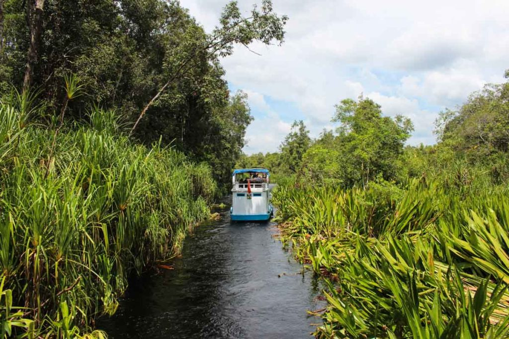 Cruising the Tanjung Puting National Park through narrow rivers, the adventurous park of this amazing tour.