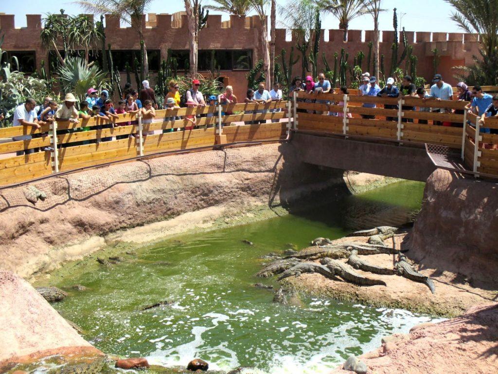 crocoparc-agadir-bassins-crocodiles-min
