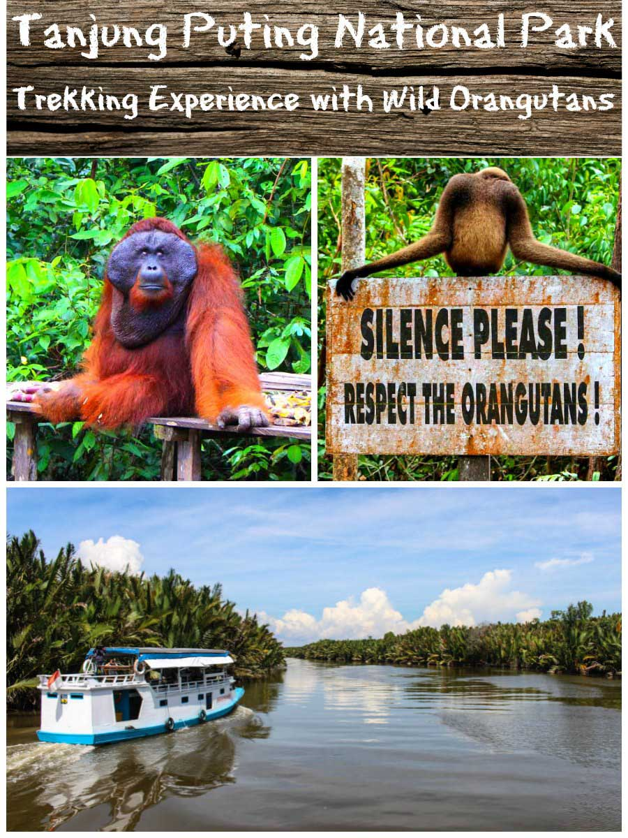 Tanjung Puting National Park - An Incredible Trekking Experience with Wild Orangutans!
