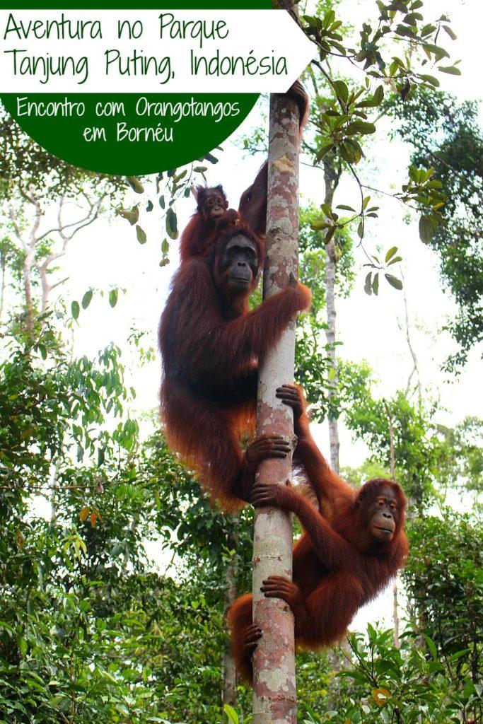 Viagem ao Parque Tanjung Puting em Bornéu, Indonésia e o encontro com Orangotangos. Dicas para planejar a viagem ao parque Tanjung Puting, navegar pela floresta e dormir a luz do luar.