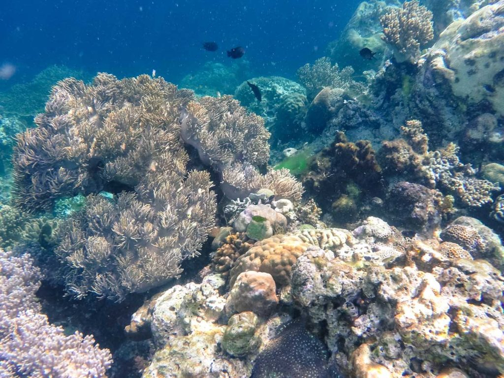 In Wakatobi Islands there are over 50 spots for scuba diving, a truly underwater paradise.