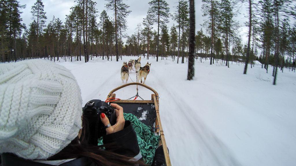 O trenô de cachorros na Finlândia é pura diversão. Os cachorros correm muito rápido.