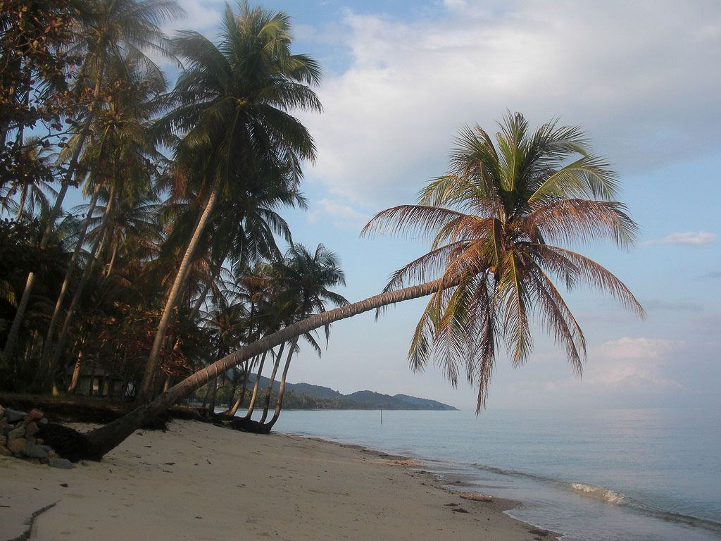You will find incredible nature when you visit Koh Samui.