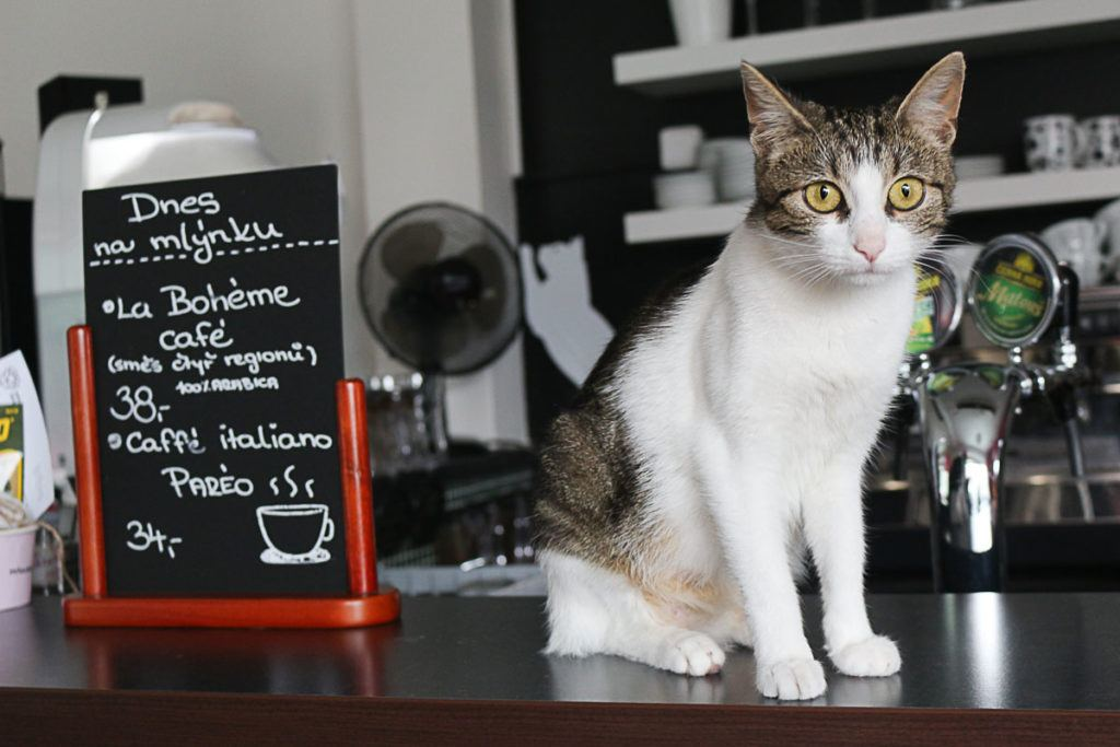 Olomouc has a cat cafe!! If you like cats and coffee this a place you must visit in Olomouc.