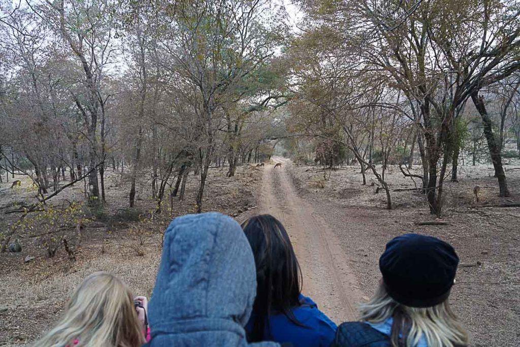 O Parque Nacional Ranthambore é famoso pelos tigres no pacote do Palace on Wheels está incluso um safari lá.
