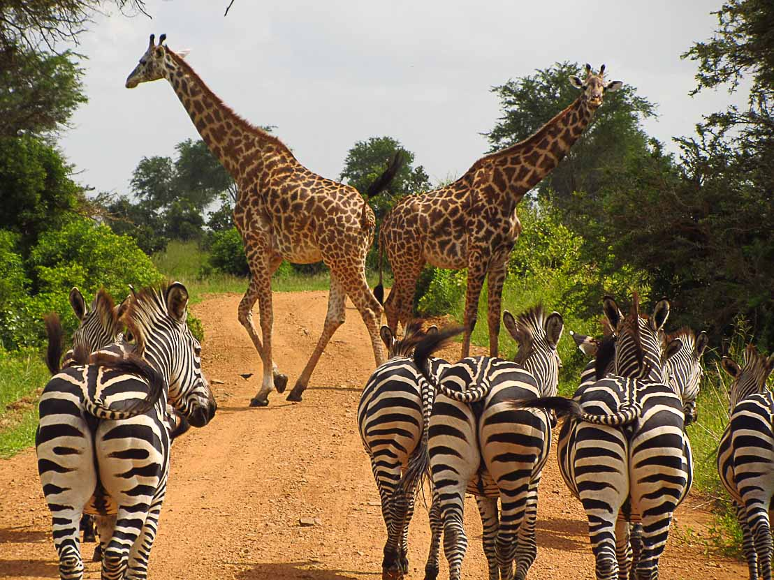 5 Things You Need to Know Before Traveling to Tanzania