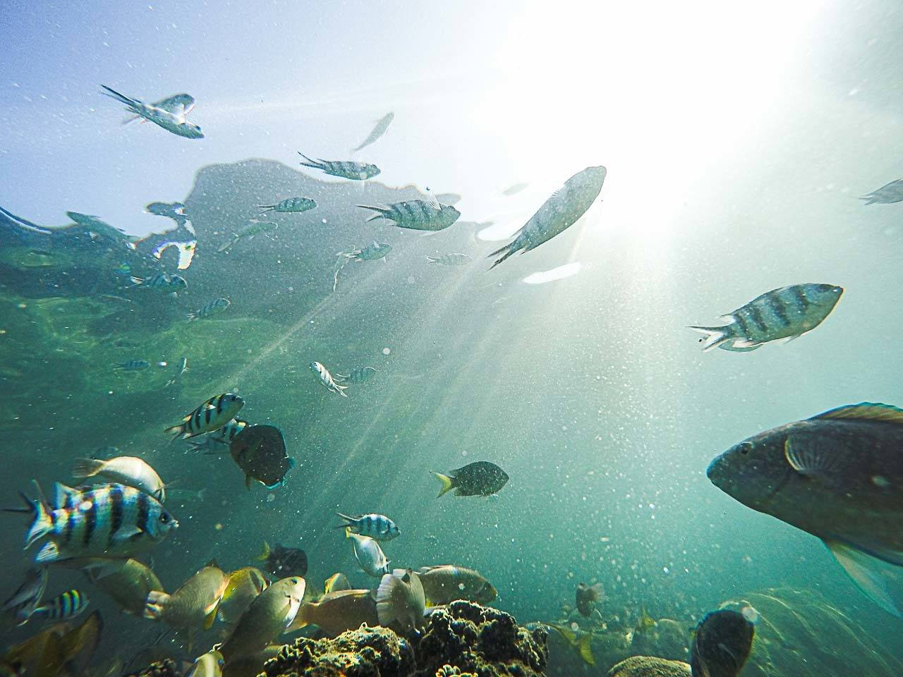 Fish and marine life in Thailand's sea.