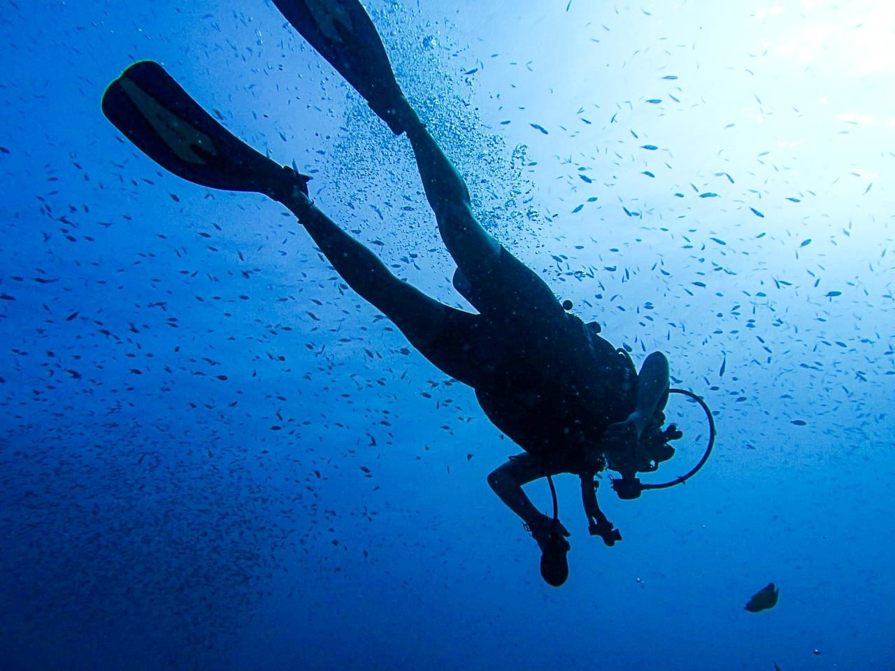 Surrounded by fish, a diver practices snorkeling in Koh Tao, Thailand.